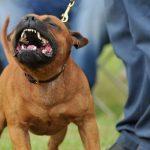 Dog Barking Mp Free Download